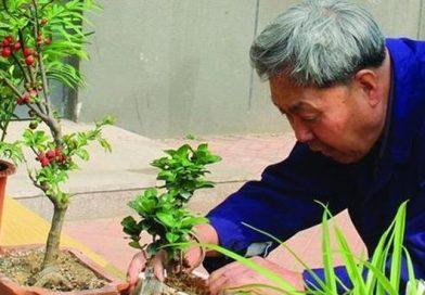 Mách bạn 4 bí quyết vàng khi trồng hoa, cứ trồng là cây sẽ tươi tốt, hoa sẽ xum xuê